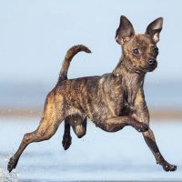 Lilli Bürohund